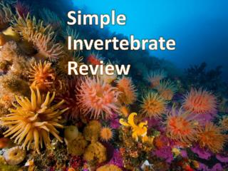 Simple Invertebrate Review