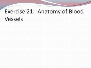 Exercise 21:  Anatomy of Blood Vessels