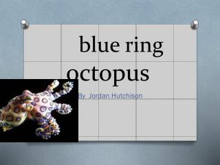 blue ring octopus blue ring  octopus