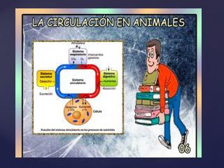 El tipo de sistema circulatorio de un animal, depende de sus necesidades de nutrientes y energía