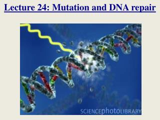 Lecture 24: Mutation and DNA repair