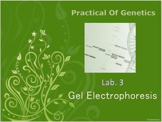 Lab. 3 Gel Electrophoresis