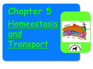 Chapter 5 Homeostasis and Transport