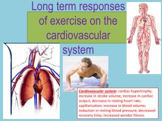 Long term responses of exercise on the  cardiovascular  system