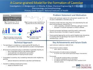A Coarse-grained Model for the Formation of  Caveolae