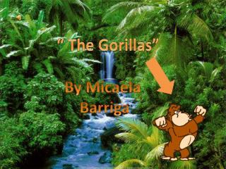 �  The Gorillas �