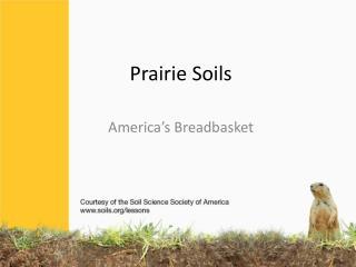 Prairie Soils