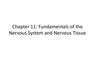 Chapter 11: Fundamentals of the Nervous System and Nervous Tissue
