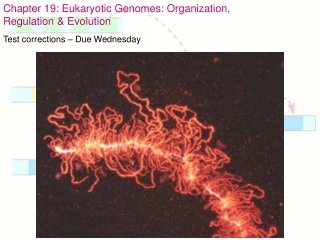 The Organization and Control of Eukaryotic Genomes 1