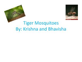 Tiger Mosquitoes By: Krishna and Bhavisha