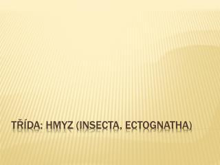 Třída: Hmyz ( Insecta ,  Ectognatha )