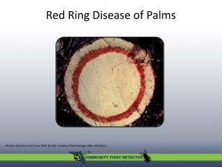 Red Ring Disease of Palms