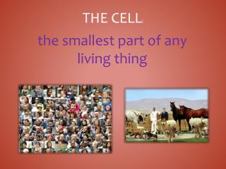 The Cell :