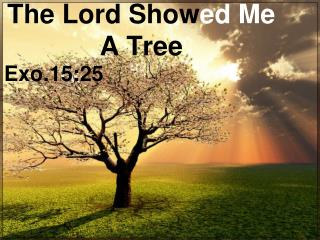 The Lord Show ed Me  A  Tree