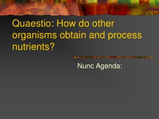 Quaestio: How do other organisms obtain and process nutrients?