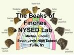 The Beaks of Finches  NYSED Lab