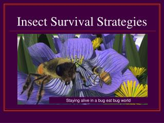Insect Survival Strategies