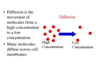 Diffusion is the movement of molecules from a high concentration to a low concentration. Many molecules diffuse across c