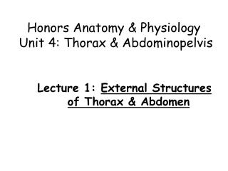 Honors Anatomy  & Physiology  Unit 4: Thorax &  Abdominopelvis