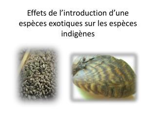 Effets de l'introduction d'une espèces exotiques sur les espèces indigènes