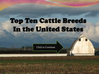 Top Ten Cattle Breeds In the United States