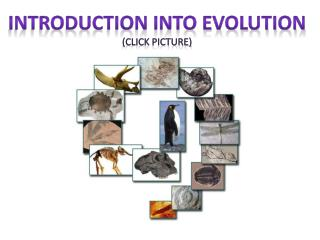 Introduction into evolution (click Picture)