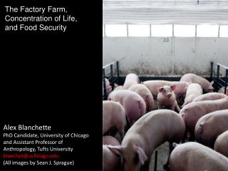 The Factory Farm,  Concentration of Life,  and Food Security