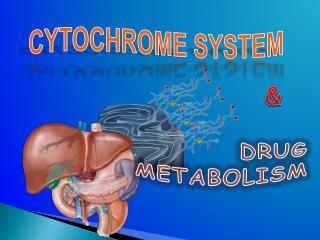 CYTOCHROME SYSTEM