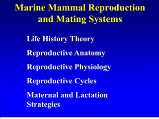 Marine Mammal Reproduction and Mating Systems