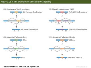 Figure 2.26  Some examples of alternative RNA splicing