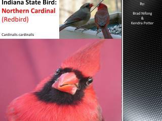 Indiana State Bird: Northern Cardinal  ( Redbird) Cardinalis cardinalis