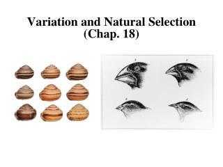 Variation and Natural Selection Chap. 18