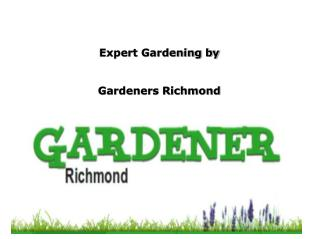 Reliable Gardeners in Richmond