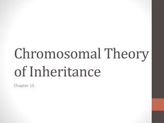 Chromosomal  T heory of Inheritance