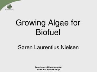 Growing Algae for Biofuel