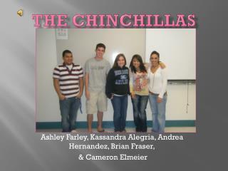 The Chinchillas