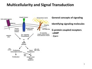 Multicellularity and Signal Transduction