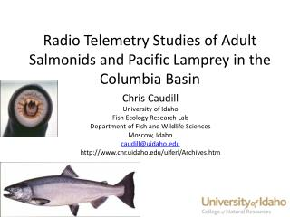 Radio Telemetry Studies of Adult Salmonids and Pacific Lamprey in the Columbia Basin