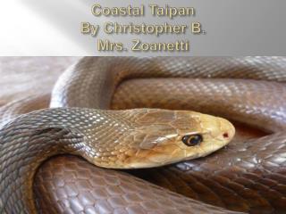 Coastal Taipan By Christopher  B. Mrs. Zoanetti