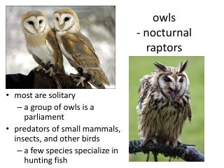 owls  - nocturnal raptors