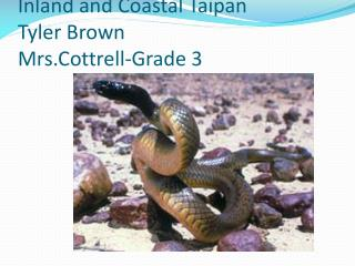 Inland and Coastal  Taipan Tyler Brown Mrs.Cottrell -Grade 3