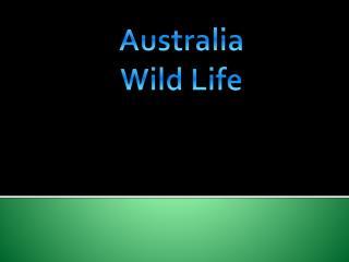 Australia W ild L ife