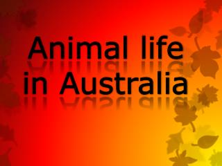 Animal  life  in Australia