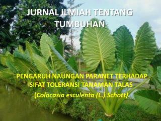 JURNAL ILMIAH TENTANG TUMBUHAN