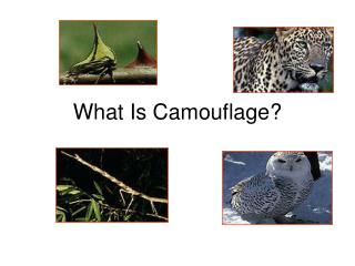 What Is Camouflage