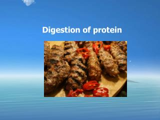 Digestion of protein
