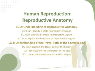 Human Reproduction: Reproductive Anatomy
