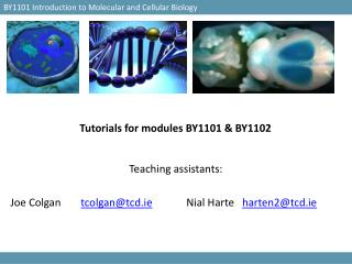 Tutorials for modules BY1101 & BY1102