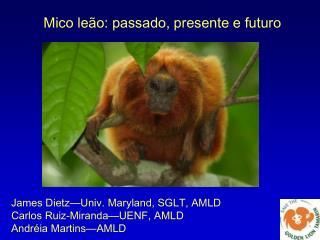Mico leão: passado, presente e futuro