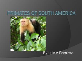 Primates of South America